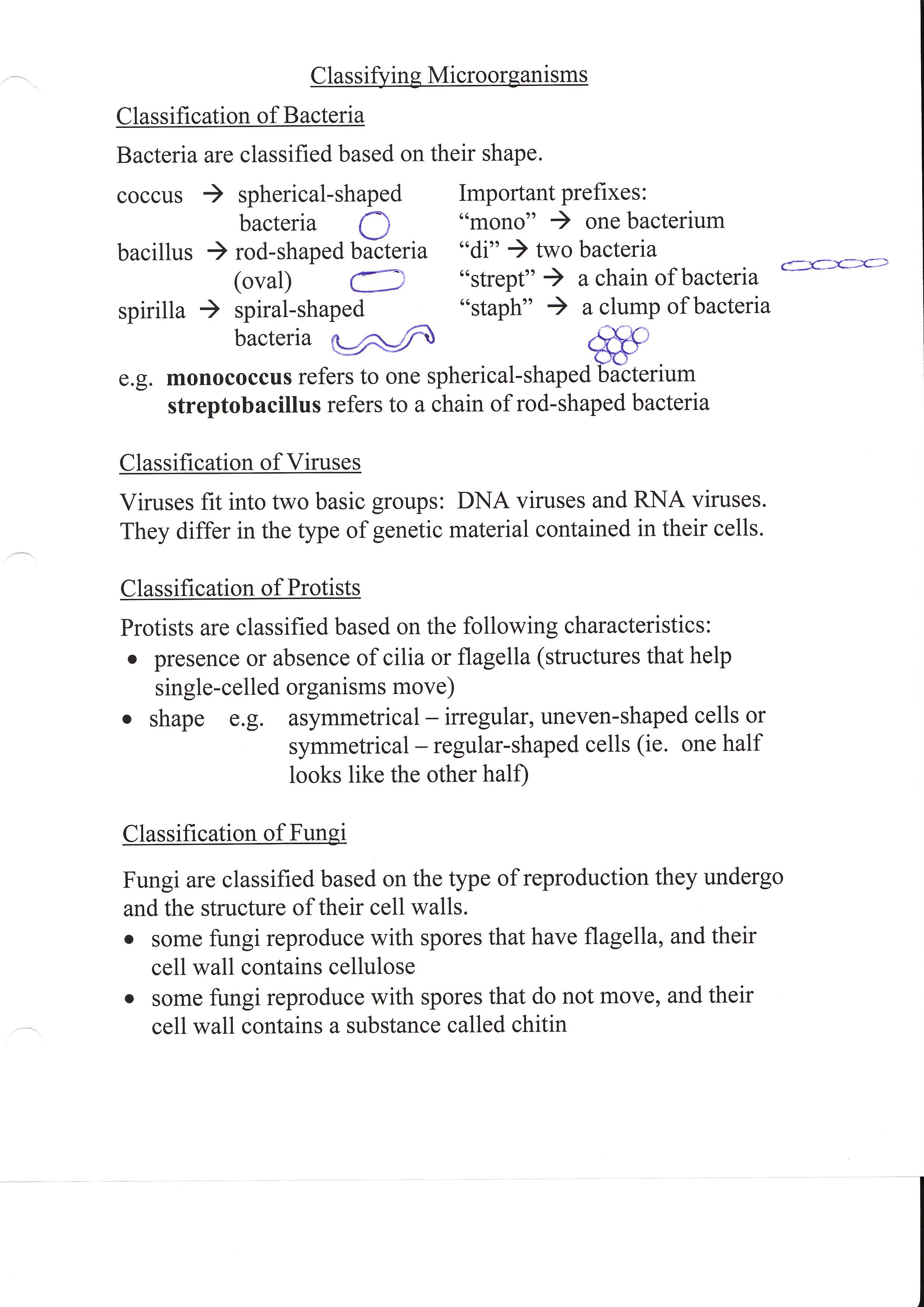 bancejscience SBI3C – Bacteria and Viruses Worksheet